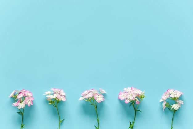 Границу сделали маленькие цветущие цветы с копией пространства. концепция привет весна или лето, женский день