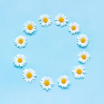 花の組成物。青の背景に花カモミールの花の丸い花輪をフレームします。