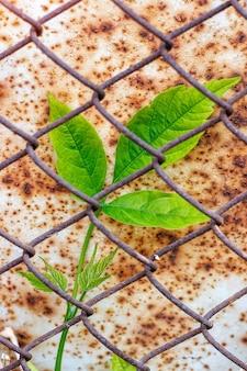 金属メッシュのための緑の枝植物