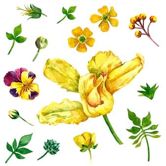 白地に水彩で描かれた野生の花