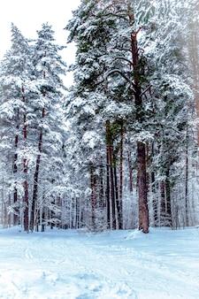 冬の森、道路、雪の中の木