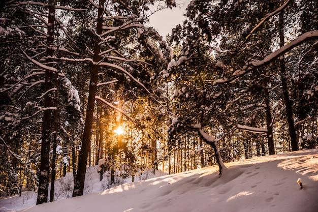 冬の森の中で太陽の光