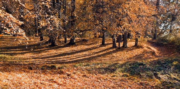 森の屋外の秋の木々。自然。