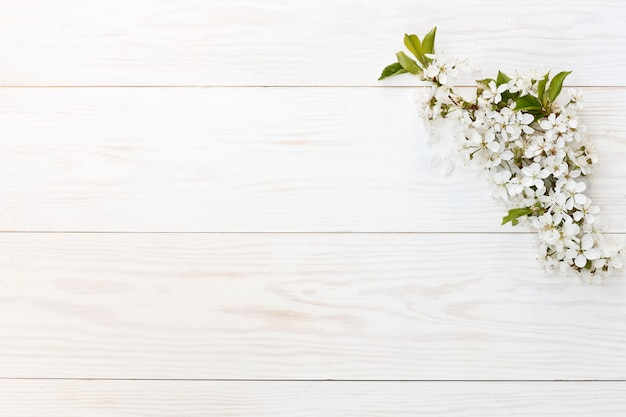 美しい白い開花桜の木の枝のクローズアップ写真。