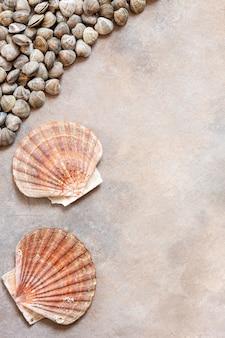 Свежие сырые раковины моллюсков и морской гребешок.