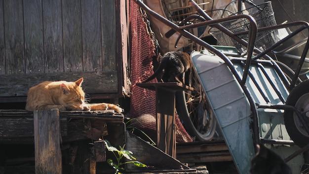 Кошка дремлет на старом заброшенном доме возле груды сломанных старых металлических инструментов