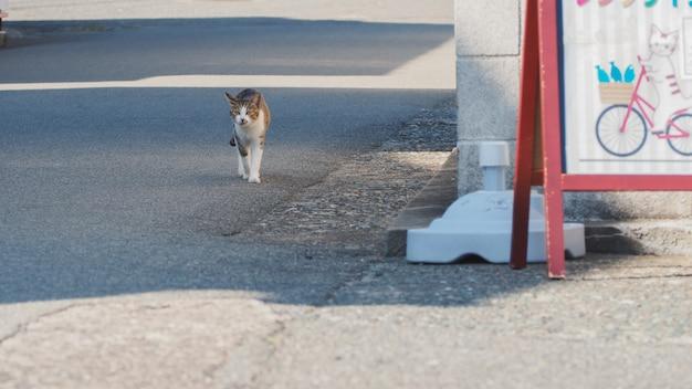 Кошка гуляет по улице возле порта