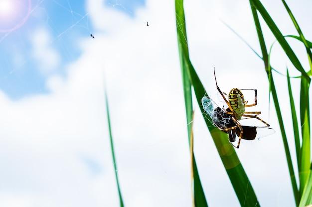 クモとその獲物は、空を背景にぼかしとクモの巣に。