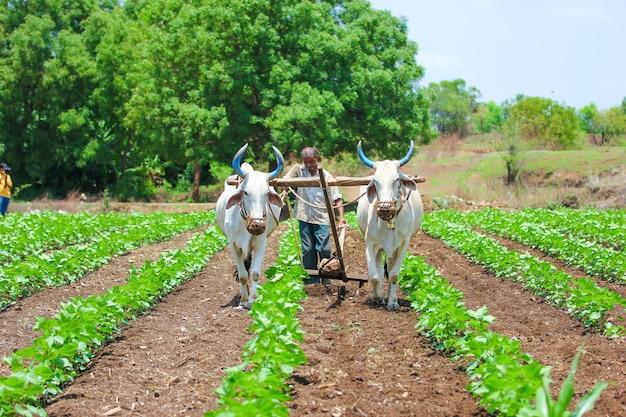 インドの農業技術