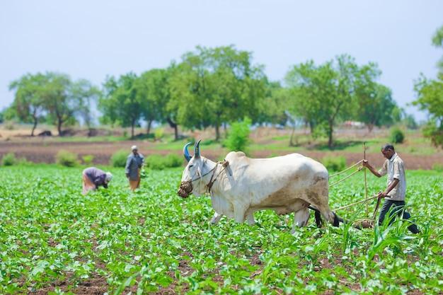 Индийская сельскохозяйственная техника