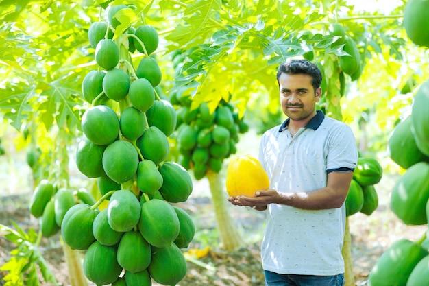 パパイヤのフィールドで若いインド人農家