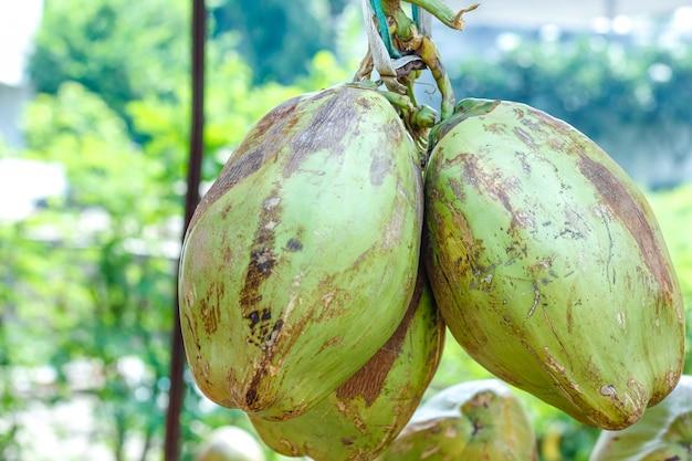インドの緑のココナッツの束またはグループ
