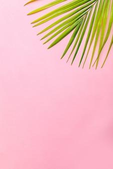 ピンクの背景のコピースペースと緑の葉