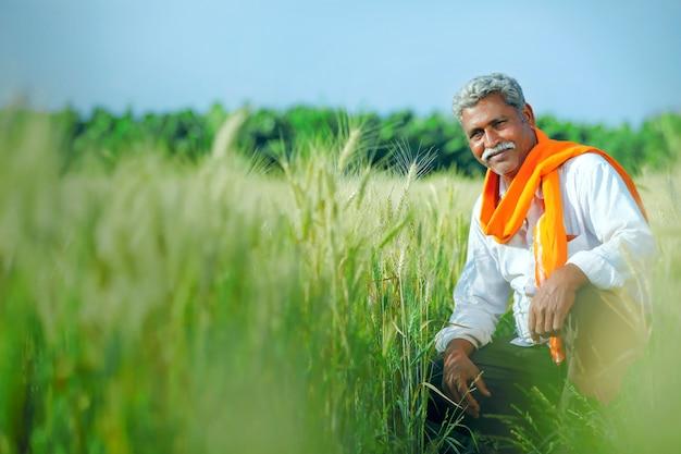 Индийский фермер держит растениеводство на своем пшеничном поле