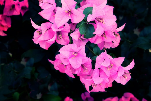 Фиолетовый цветочный фон текстура, естественный фон