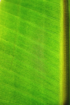 Крупным планом банановых листьев текстура фон