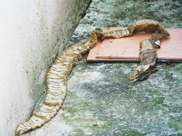 自宅でヘビの脱皮皮膚