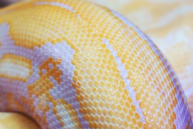 アルビノニシキヘビの皮テクスチャ背景をクローズアップ