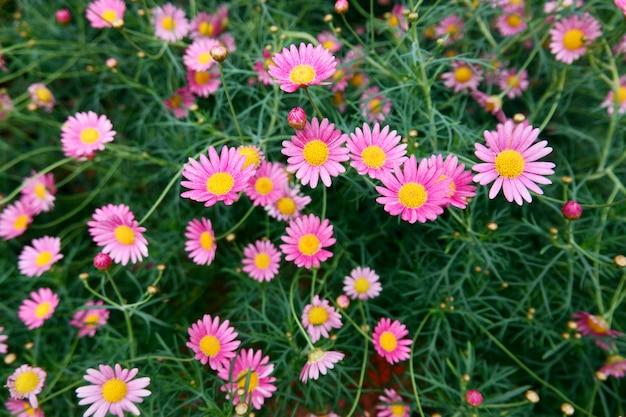 咲く花と花のドームの木