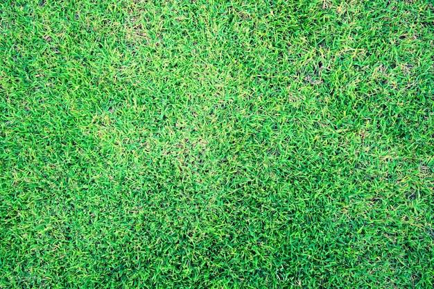 自然の新鮮な春の緑の芝生テクスチャ背景のクローズアップ