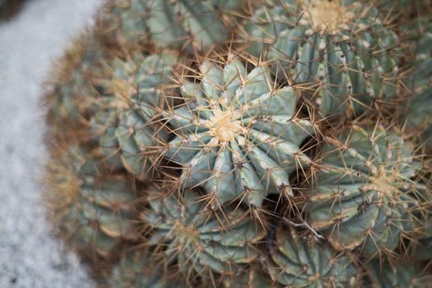 Крупным планом кактус урожай ретро стиль фона