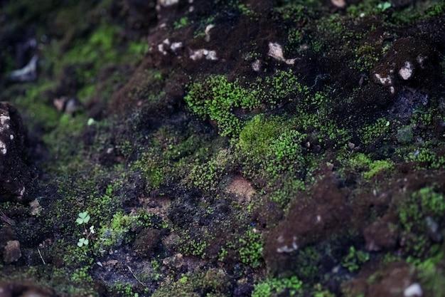 自然の緑の石の苔の背景