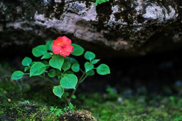 Натуральный красный цветок в саду