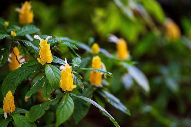 Натуральный желтый цветок в саду