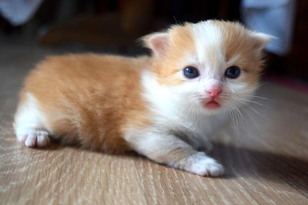 Пушистый милый котенок