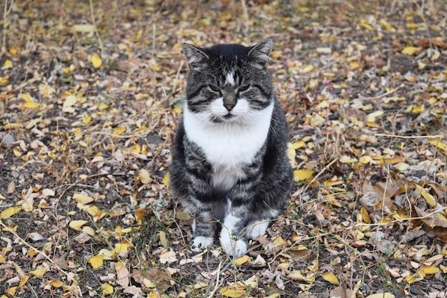 通りの猫が葉に座っていると見ています。