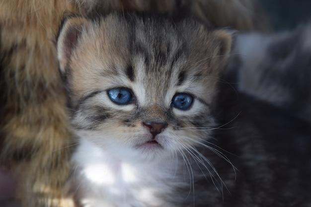 ハンサムな子猫