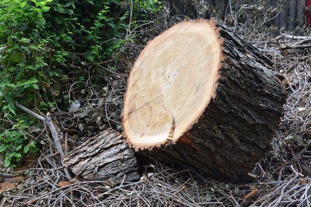 丸太の伐採の製材所