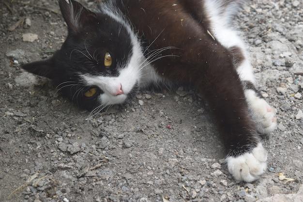 Милый черный котенок спит на улице