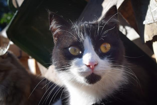 Милый кот крупным планом фон