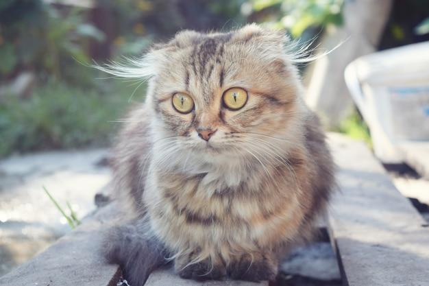 かわいい猫の背景を閉じる