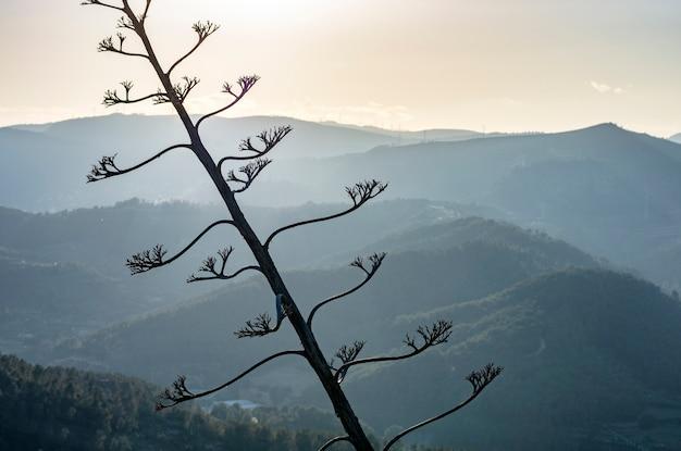 山の上に沈む夕日