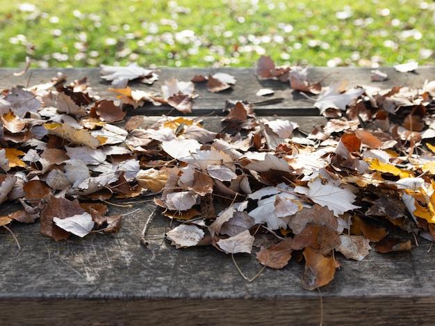 Осенние листья на деревенском дереве в поле