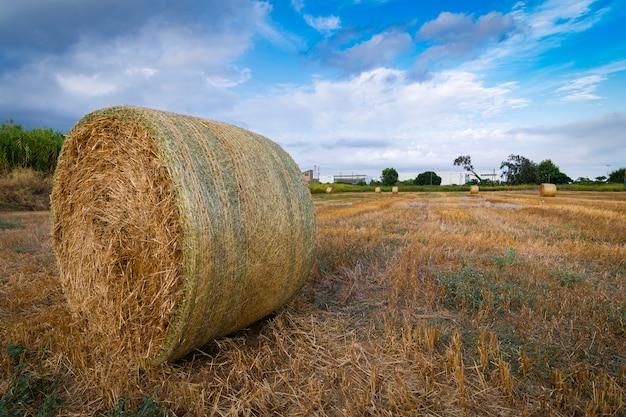 Тюки соломы в поле на закате