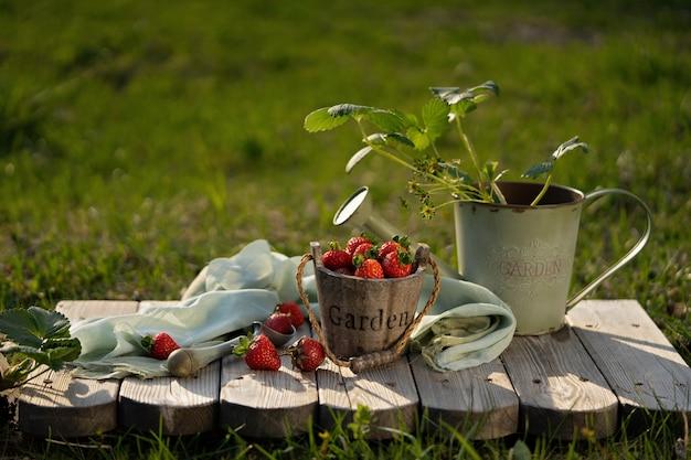 Свежая клубника в красивой винтажной корзине. старинные садовые инструменты