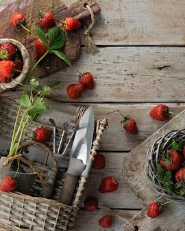 Клубничные ветки и разделочные доски с клубникой на старых досках. вид сверху. урожай настроения. садовые инструменты
