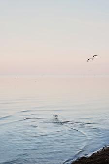 白いカモメが冷たいと青い海の水の波の上を飛ぶ