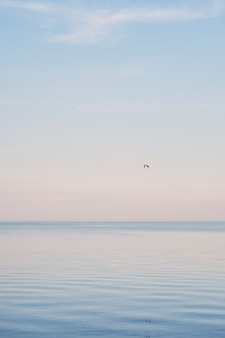 青い海の表面と波に冷たいと浮かぶ白いカモメの群れ