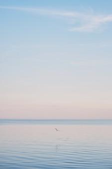 白いカモメが冷たいと青い海の水の波の上を飛んでいます。