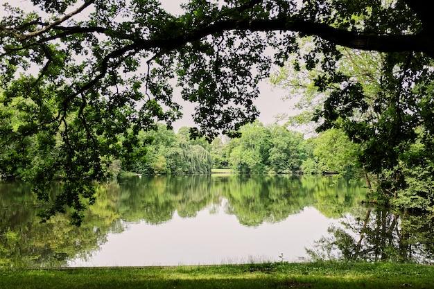 Красивые виды через большие зеленые деревья на озере за городом