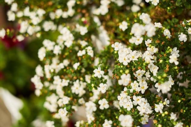 Фон маленькие белые цветы в саду