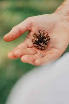 手のひらにマツ円錐形。背景をぼかした写真芝生を背景に大きなモミの実