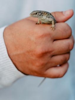 男、拳、クローズアップの手に小さな小さなトカゲ