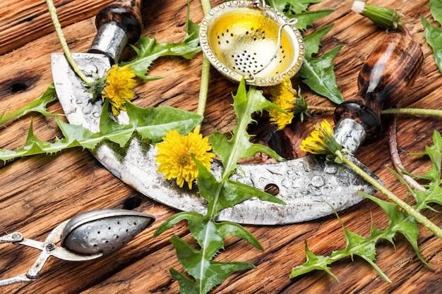 テーブルの上のタンポポの植物