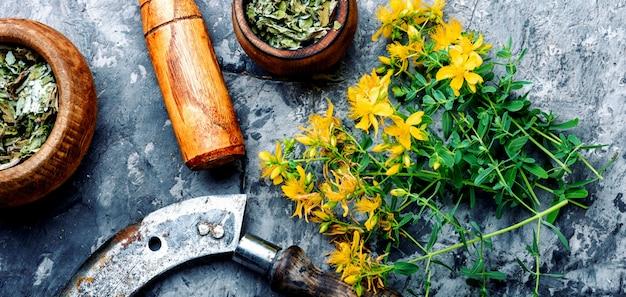咲くオトギリソウの束