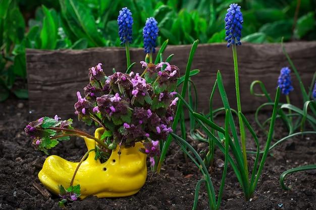鉢の観賞用の花のお手入れ
